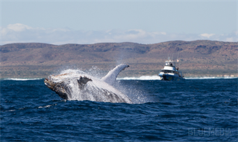 Humpback and boat